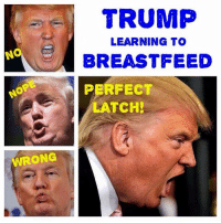 Open wide!: TRUMP  LEARNING TO  NON BREASTFEED  PERFECT  LATCH!  WRONG Open wide!