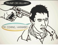 Trump, Dank Memes, and Harambe: TRUMP OR HILLARY?  'M COMING, HARAMBE!