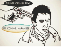 Memes, Trump, and Harambe: TRUMP OR HILLARY?  'M COMING, HARAMBE!