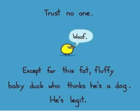 That's right ;): Trust no one  Woof.  Except for this fat, fluffy  baby duck who thinks he's a dog  He's legit. That's right ;)