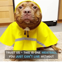 Memes, 🤖, and Now You Know: TRUST US THIS IS ONE MEATBALL  YOU JUST CAN'T LIVE WITHOUT If you don't know about this meatball, now you know. Thank you for being you Meaty. pitbullfridays @loveabulllisa