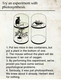 Mouse, Oxygen, and Photosynthesis: Try an experiment with  photosynthesis.  1. Put two mice in two containers, but  put a plant in the bottom of one.  2. The mouse without the plant will die  because it ran out of oxygen.  3. By performing this experiment, we've  proven you have some serious  psychological problems.  4. Seriously, it was just photosynthesis.  We knew about it already. Herbert died  for nothing me irl
