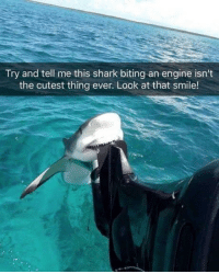 Funny, Shark, and Smile: Try and tell me this shark biting an engine isn't  the cutest thing ever. Look at that smile! Awww. https://t.co/FyjMkzoeAy