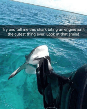 Shark, Smile, and Engine: Try and tell me this shark biting an engine isn't  the cutest thing ever. Look at that smile! Just havin' a nibble