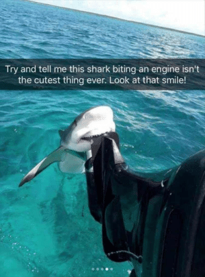 Funny, Shark, and Smile: Try and tell me this shark biting an engine isn't  the cutest thing ever. Look at that smile! Bite or Smile..?