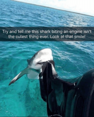 Shark, Happy, and Sharks: Try and tell me this shark biting an engine isn't  the cutest thing ever. Look at that smile! Sharks are more wholesome then we think. Look at how happy he looks.