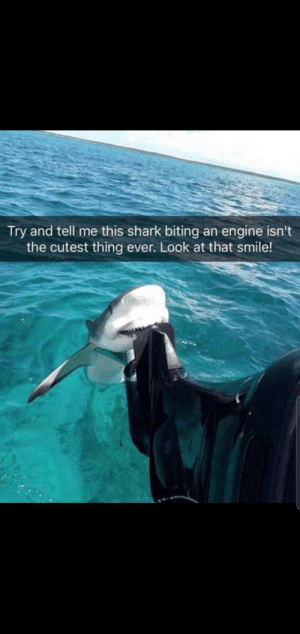 Aww, Shark, and Smile: Try and tell me this shark biting an engine isn't  the cutest thing ever. Look at that smile! Aww