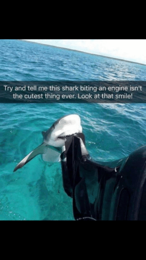 Shark, Smile, and Engine: Try and tell me this shark biting an engine isn't  the cutest thing ever. Look at that smile! Just trying make people ☺
