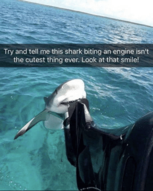 Cute, Shark, and Smile: Try and tell me this shark biting an engine isn't  the cutest thing ever. Look at that smile! Cute smile
