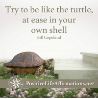 Memes, Turtle, and Affirmation: Try to be like the turtle,  at ease in your  own shell  Bill Copeland  PositiveLife Affirmations net <3 Positive Life Affirmations  .