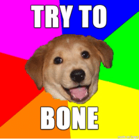 Advice, Bones, and Funny: TRY TO  BONE Advice Dog teaches us how to advance a romantic interest
