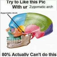 Dank Memes, Arch, and Pics: Try to Like this Pic  With ur Zygomatic arch  Zygomatic Arch  80% Actually Can't do this