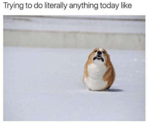 Literally Anything