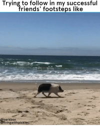 WAIT FOR MEEEEEEEEEEEE 🏃‍♂️💨 - @livingwithpickles 🐽 🐽 🐽 THANK YOU ALL FOR TUNING IN TO PIGWEEK. I HOPE YOU HAVE ENJOYED EVERY SNOOT AND HOOF. WE SURE HAVE. goals pigs summertime sendhelp snortbox: Trying to follow in my successful  friends' footsteps like  barkbox  livingwithpickles WAIT FOR MEEEEEEEEEEEE 🏃‍♂️💨 - @livingwithpickles 🐽 🐽 🐽 THANK YOU ALL FOR TUNING IN TO PIGWEEK. I HOPE YOU HAVE ENJOYED EVERY SNOOT AND HOOF. WE SURE HAVE. goals pigs summertime sendhelp snortbox