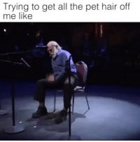 Funny, Hair, and Relatable: Trying to get all the pet hair of  me like Follow @ellentvshow for funny & relatable photos