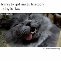 Bruh, Funny, and Today: Trying to get me to function  today is like:  SENORGIF.COM  IG: @girlsthinkimfunny Not happening bruh😴💀 sundayfunday notmoving