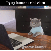 When you're desperate for that internet fame.. 😂😂  by Aaron's Animals: Trying to make a viral video  VENT GF PARKS  @Aarons Animals When you're desperate for that internet fame.. 😂😂  by Aaron's Animals