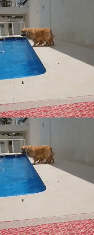 Trying to push her sister into the pool! (via): Trying to push her sister into the pool! (via)