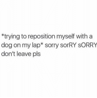 Love, Sorry, and Girl Memes: trying to reposition myself with a  dog on my lap* sorry sorRY sORRY  don't leave pls Just let me love u pupper