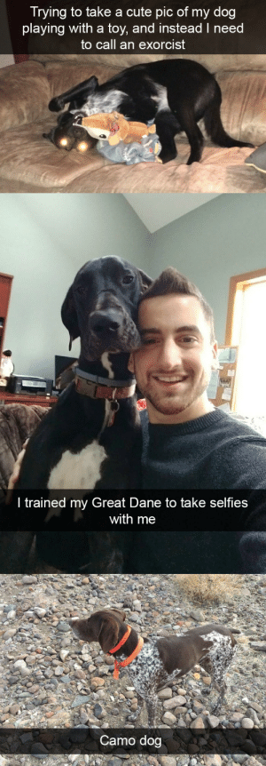 animalsnaps:Dog snaps: Trying to take a cute pic of my dog  playing with a toy, and instead I need  to call an exorcist   ir  I trained my Great Dane to take selfies  with me   Camo dog animalsnaps:Dog snaps