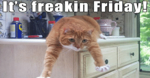 Its Freakin Friday !!!!!!!!!!!!!!!!!!! TGIF !!!!!!!!!!!!  Have a great day all: t's  freakin  Friday! Its Freakin Friday !!!!!!!!!!!!!!!!!!! TGIF !!!!!!!!!!!!  Have a great day all