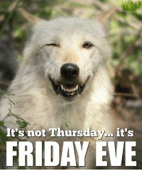 Friday, It's Friday, and Memes: t's not Thursday it's  FRIDAY EVE Sounds so much better!! Wolf Conservation Center