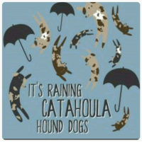 What do we need? FOSTER HOMES! When do we need them? Uh, like, yesterday. And the day before that. And last week. And...well, you get the picture.   We are drowning in requests to help Catahoula's in need, but we can't pull any of them because we have nowhere to put 'em. Fostering is the only way we can help these dogs, and we rely on our foster homes to be a safe landing spot and the bridge between homeless Catahoula's and happily ever after. Blackjack Animal Rescue and Catahoula Connection covers all vetting costs, and we only ask you to provide love. Even better, because we are a 501(c)(3) organization, any personal costs related to fostering for us are tax deductible. Everybody wins!  If you've ever considered fostering but have yet to jump in, now is the time!  Apply today! www.blackjackrescue.org Learn what it feels like to save a life!: TS RAINING  CATAHOULA  HOUND DOGS What do we need? FOSTER HOMES! When do we need them? Uh, like, yesterday. And the day before that. And last week. And...well, you get the picture.   We are drowning in requests to help Catahoula's in need, but we can't pull any of them because we have nowhere to put 'em. Fostering is the only way we can help these dogs, and we rely on our foster homes to be a safe landing spot and the bridge between homeless Catahoula's and happily ever after. Blackjack Animal Rescue and Catahoula Connection covers all vetting costs, and we only ask you to provide love. Even better, because we are a 501(c)(3) organization, any personal costs related to fostering for us are tax deductible. Everybody wins!  If you've ever considered fostering but have yet to jump in, now is the time!  Apply today! www.blackjackrescue.org Learn what it feels like to save a life!