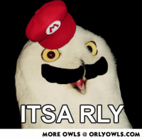 Dug deep into the vault (early 2000s). Can I get this appraised?: TSA RL  MORE OWLS  ORLYOWLS.COM Dug deep into the vault (early 2000s). Can I get this appraised?