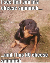 Bahahahaha! doghumour dogsofig dogsofinstagram pethumor teacherhumor schoolfunnies hilarious lol laugh funny teachersfollowteachers teachersofinstagram iteachtoo teachersofig iteachfourth teacherlife Repost@from @mcmasterkerry: Tsee that Voll haz  cheese sammich  and I has NO cheese  sammich, Bahahahaha! doghumour dogsofig dogsofinstagram pethumor teacherhumor schoolfunnies hilarious lol laugh funny teachersfollowteachers teachersofinstagram iteachtoo teachersofig iteachfourth teacherlife Repost@from @mcmasterkerry