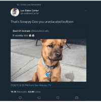 Animals, Memes, and Scooby Doo: tt Stona Lisa Retweeted  Leo Blake Carter  @LeoBlakeCarter  That's Scrappy Doo you uneducated buffoon  Best Of Animals @BestofAnimalls  lil scooby doo 0  7/26/17, 8:33 PM from San Marcos, TX  15.1K Retweets 43.9K Likes Scoobert Doo's nephew, Scrappy