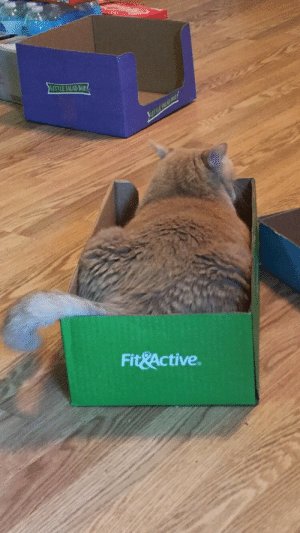 Love, Tumblr, and Blog: TTLE SALAD BAP  Fit&Active. minnesotawildofficial: unflatteringcatselfies: he is neither fit nor active.  incorrect, he fits in the box and activates my heart with love