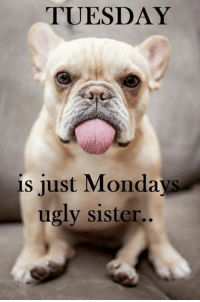 Tuesday is must Monday's ugly sister   BOL   #dog: TUESDAY  is just Mondays  ugly sister.. Tuesday is must Monday's ugly sister   BOL   #dog