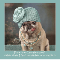 Memes, Precious, and Calendar: TULA San  Sometimes I amaze myself...  other times I Can't remember what day it is. Precious  #foralwaysclarafrancis <3 <3 <3 She is Miss September in our NEW 2017 Gretta's Girls (by pugs and kisses) calendar. This is one of mom's all time favorite pictures of her because it captures her little soul and all the things about her that we love and miss so much <3 <3 <3  Clara was SO funny, loyal, adorable, lovable, cuddly, smart, sometimes a bit  bossy, sassy, giving, kind and oh SO sweet <3 <3 <3 She loved life and her family and brought so many smiles to so many with her therapy work. We will miss her and love her forever <3 <3 <3  To celebrate the life of Clara and ALL  precious pugs everywhere SHOP and WIN this ADORABLE pug ornament (shown below) and help pugs in need!!   Good luck to everyone <3 <3 <3  SHOP Gretta's Girls calendar and cards TODAY and tomorrow https://www.etsy.com/shop/lovepugsandkisses and you could WIN an adorable pug ornament from Pottery Barn!! And you SAVE 15% OFF of everything this weekend!!! Use code HAPPY15 This giveaway is our THANK YOU to you for all your recent orders...(We will be drawing the winner from all Etsy orders from Sept 8 - till tomorrow, Sunday November 20). There is still time to be in the running! THANK YOU friends! Love and thanks to you all and best of luck! Maddie, Zoe, and Ollie PS The code HAPPY15 is not case sensitive. Write to us if we can help in any way. GIVEAWAY RULES: 1) Winner will be drawn randomly from orders placed September 8 - Sunday Nov 20th  2) The winner will be announced on Monday Nov 21st (by 3pm EST). 3) The winner will be announced in a Facebook post and in the comments of this post. The winner will be private messaged by one of our humans. 4) If we do not hear from the winner after two messages and within one week of the first message, the prize will go to a runner-up winner. Pugs and Kisses accepts all responsibility for carrying out this giveaway as outlined above. F