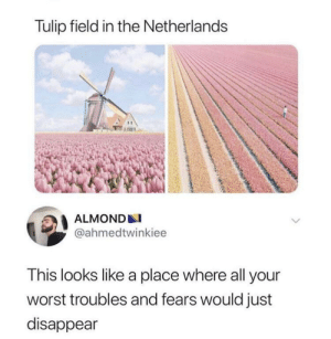This place that melts worries away: Tulip field in the Netherlands  ALMOND  @ahmedtwinkiee  This looks like a place where all your  worst troubles and fears would just  disappear This place that melts worries away
