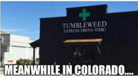 Driving, Memes, and Drive: TUMBLE WEED  EXPRESS DRIVE-THRU  MEANWHILE INCOLORADO ✌️