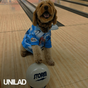 This dog is better at bowling than I'll ever be! 😂🎳: Turbo  ENFLS  STORM  UNILAD This dog is better at bowling than I'll ever be! 😂🎳