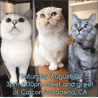 Hello everyone, we added Catcon meet and greet on Saturday. Limited tickets available for both Saturday and Sunday! 100% of net proceeds benefit animals in need. bit.ly-NalacatCatcon: turdoy Auaust 12  Som-430pm meet and areet  at Catcon Pasadena, CA  30  eet and gret Hello everyone, we added Catcon meet and greet on Saturday. Limited tickets available for both Saturday and Sunday! 100% of net proceeds benefit animals in need. bit.ly-NalacatCatcon