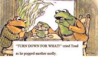 "Memes, Molly, and Http: TURN DOWN FOR WHAT!"" cried Toad  as he popped another molly <p>Frog and Toad memes? Safe to invest? via /r/MemeEconomy <a href=""http://ift.tt/2o3KWGs"">http://ift.tt/2o3KWGs</a></p>"