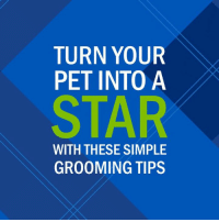 If you've been thinking about entering the Houston SPCA 2019 Calendar Photo Contest, get your pet all dolled up and snap a portrait! Submit your entries or vote here: http://bit.ly/2wVtoPa: TURN YOUR  PET INTO A  STAR  WITH THESE SIMPLE  GROOMING TIPS If you've been thinking about entering the Houston SPCA 2019 Calendar Photo Contest, get your pet all dolled up and snap a portrait! Submit your entries or vote here: http://bit.ly/2wVtoPa