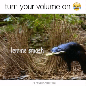 Lemme smash - Watch or Download | downvids.net: turn your volume on  YT thejarrodytis  lemme smash  FB: PAKALUPAPITOOFFICIAL Lemme smash - Watch or Download | downvids.net