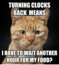 Memes, 🤖, and Page: TURNING CLOCKS  BACK MEANS  I HAVE TO WAIT ANOTHER  HOUR FOR MY FOOD? For more cute pics LIKE us at The Purrfect Feline Page
