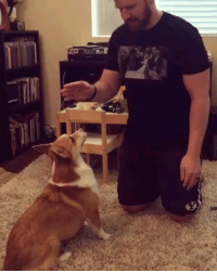 9gag, Corgi, and Memes: Turning, turning, turning through the years Minutes into hours and the hours into years. - - 📷@knittingnarwhal - - 9gag corgi