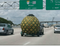 SpongeBob, Sports, and Bikini Bottom: Turnp  Orlar  874  TO 826  Miami  3 LEFT LANES  3 RIGHT #HurrcaneIrma even got us evacuating Bikini Bottom... https://t.co/BK9OWzCebh