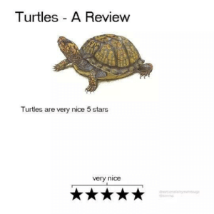 Very Nice: Turtles A Review  Turtles are very nice 5 stars  very nice  wtometamng