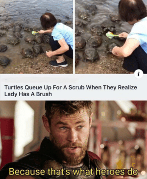 Wholesome 100: Turtles Queue Up For A Scrub When They Realize  Lady Has A Brush  Because that's what heroes do Wholesome 100