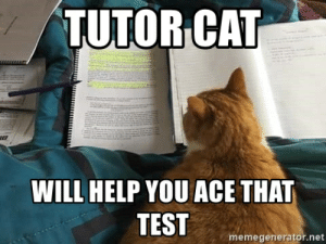 Tutor cat Will help you ace that test - Tutor cat | Meme Generator: TUTOR CAT  WILL HELP YOU ACE THAT  TEST  memegenerator.net Tutor cat Will help you ace that test - Tutor cat | Meme Generator