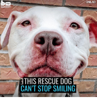 rescue dogs: TV  BAR CROFT  THIS RESCUE DOG  CAN'T STOP SMILING