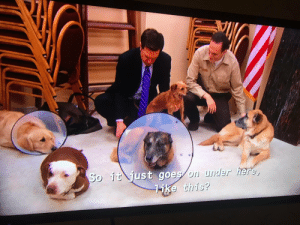 [TV Show] In The Office(2005-2013), Andy Bernard adopts a dog which also happens to be the three legged champion from Parks & Recreation(2009-2015): [TV Show] In The Office(2005-2013), Andy Bernard adopts a dog which also happens to be the three legged champion from Parks & Recreation(2009-2015)