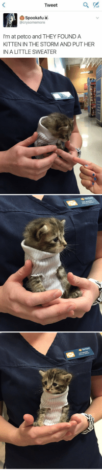Cute, Petco, and Girl Memes: Tweet  (A) SpookafuK  @crysomemore  I'm at petco and THEY FOUND A  KITTEN IN THE STORM AND PUT HER  IN A LITTLE SWEATER   TORI MEINSEN  Veterinary Assistant this is so cute 😍 https://t.co/Afy2EpwtxA