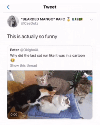 Blackpeopletwitter, Funny, and Run: Tweet  'BEARDED MANGO. #AFC  @CeeDotz  ER/ER  This is actually so funny  Peter @OkigboXL  Why did the last cat run like it was in a cartoon  Show this thread  0:00 He skedaddled like he heard pumpkin pie is ready (via /r/BlackPeopleTwitter)